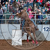 CARLEY TYLER-PRCA-BT-TH- (17)