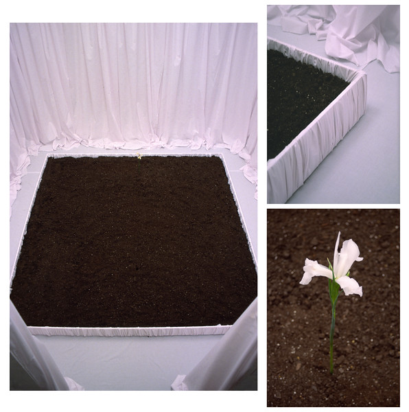 """Iris""<br /> Installation<br /> 12' x 11.4' x 8'h<br /> 1,240 Quarts of Planting Soil<br /> 93 Yards of White Sheets<br /> 1 Iris Flower<br /> Continuous Sound Loop of a Heart Beating<br /> Nov 2005<br /> <br /> In this installation one is invited to enter the piece after taking off their shoes.  The white drapes within the sacred interior evoke memories of weddings, birth, and heaven. White sheets are also placed over the dead and the Iris flower is associated with death. ""Iris"" was the Greek goddess of the rainbow, which used to travel down to earth with messages from the gods and to transport women's souls to the underworld.  The flowers themselves are alive, but have been cut and are in their transition to death. And the wood box that holds the dirt is wrapped with the same white sheets in the manner similar to the inside of a casket."
