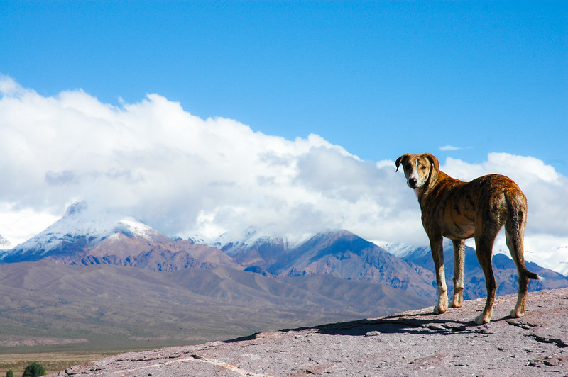 Taking in the View<br /> Uspallata, The Andes