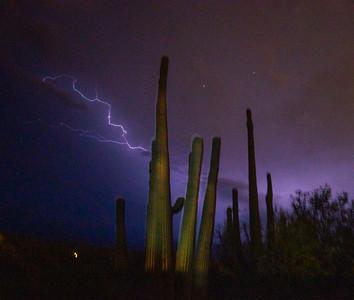 Saguaro cactus and lightning Mount Lemmon Tucson AZ southeast Arizona trip July 2021 DSC00334