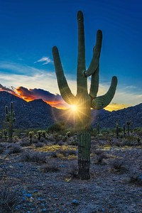 SAGUARO IS THE STAR