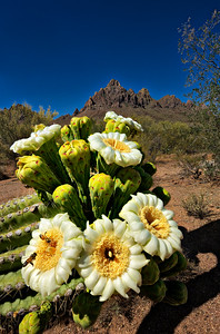 4103 Saguaro