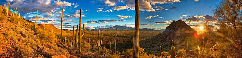 9423 Sonoran Desert