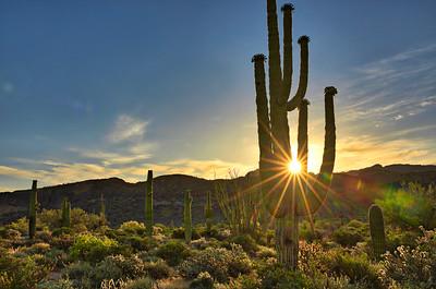 7347 Saguaro