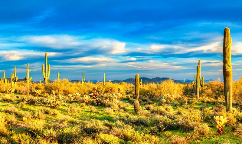 78 Sonoran Desert