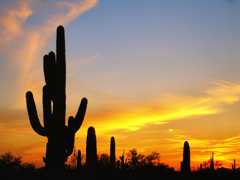 Saguaro and sunset.