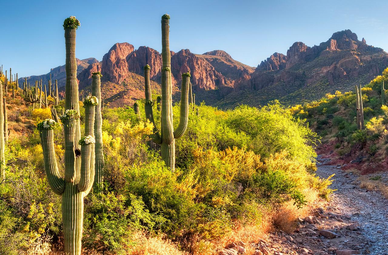 4356 Saguaros