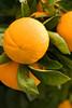 Orange9029