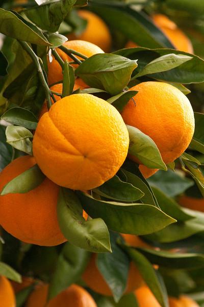 Oranges9025