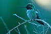 Humminbird0133