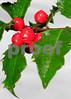 Holly2281(10x14)