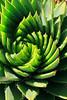 succulent9806