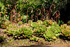 Succulents5916