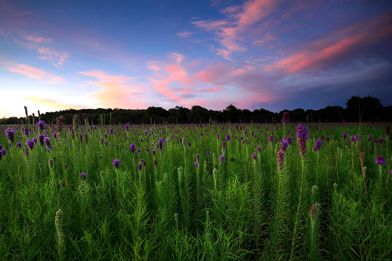 Cherokee Prairie Natural Area - Fort Smith Area