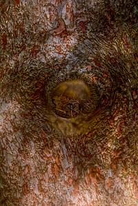 TREE BARK  3