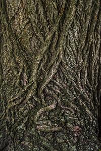 TREE BARK  10