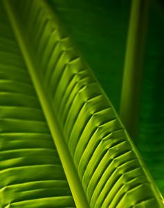 Folded Palm