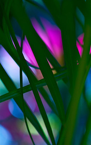 Color Palm