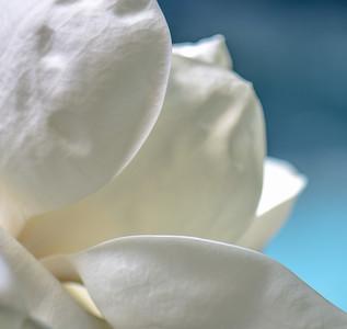 Magnolia 58