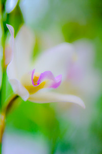 ORCHID SHOW 42