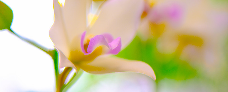ORCHID SHOW 40