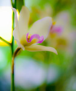 ORCHID SHOW 39
