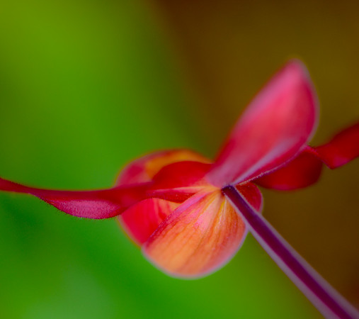 ORCHID SHOW 26