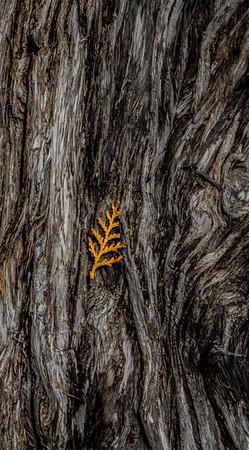 Wood Tree Leaf