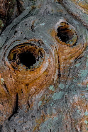 Wood Tree Abstarct