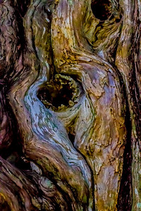 Wood Tree Abstract  Color