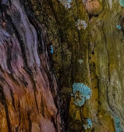 Wood Tree Abstract