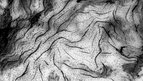 Wood Tree Abstract BW