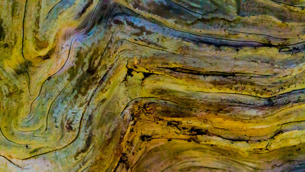 Color Wood Abstract