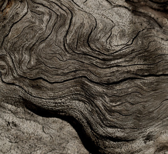 Abstract Sepia Wood
