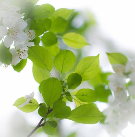 Flower Green White