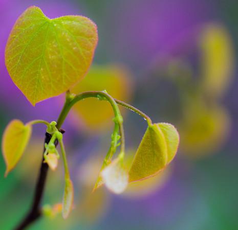 Leaf Green Purple