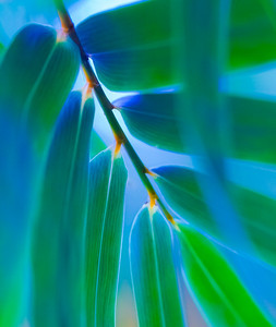 Leaf Green Blue