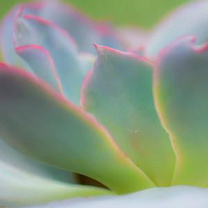 Succulent Plants 13