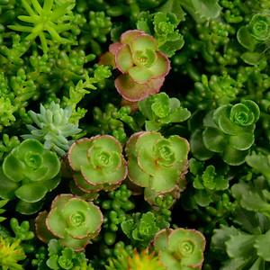 Succulent Plants 4