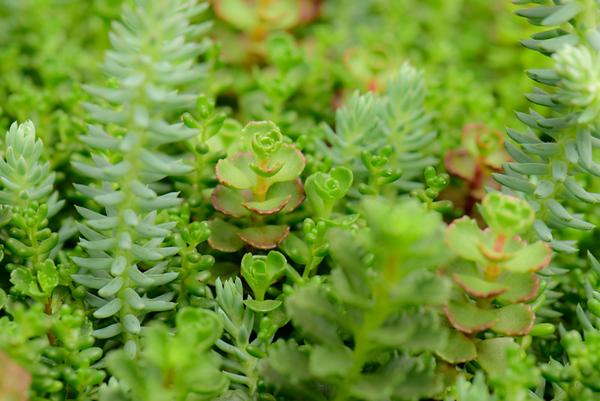 Succulent Plants 1
