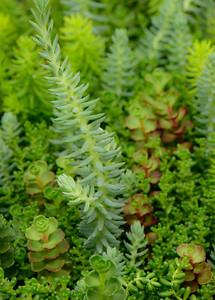 Succulent Plants 3