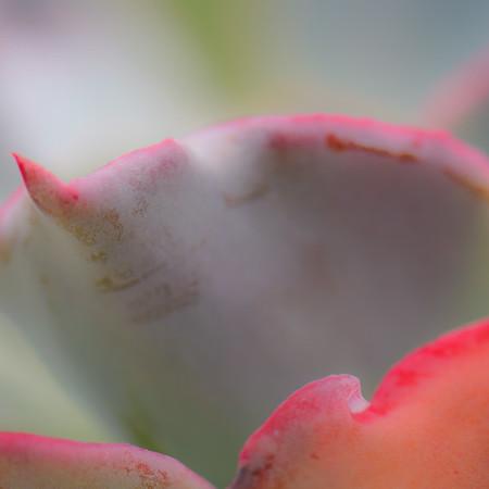 Succulent Plants 11