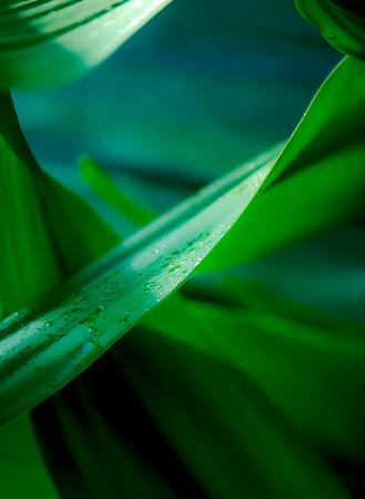 Tropical Garden 12
