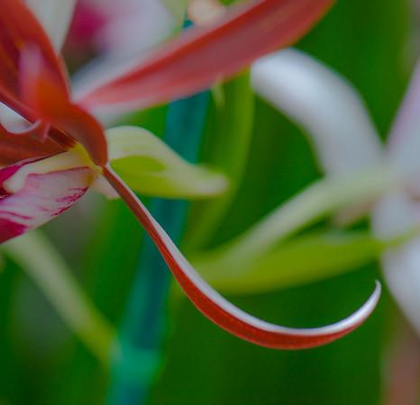 Tropical Garden 6