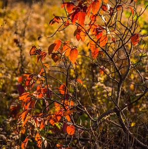 Autumn Field 23