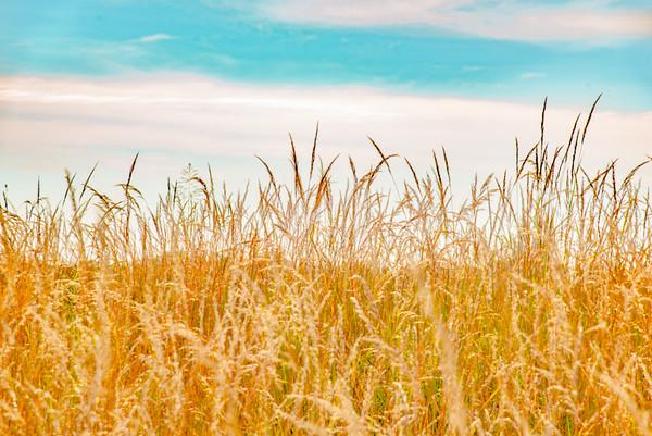 Prairie  17