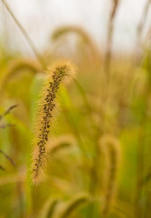 Prairie  13