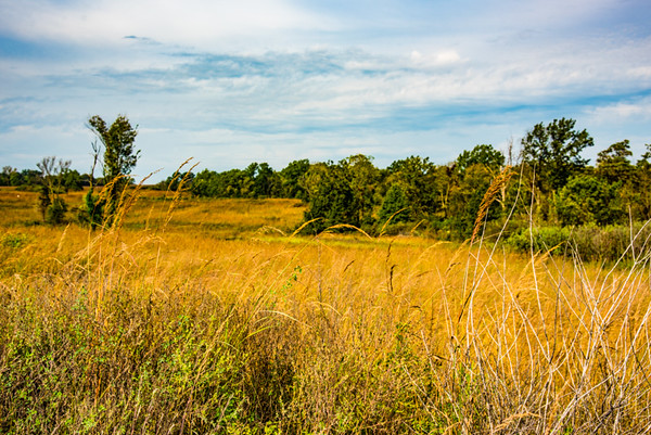 Prairie  7