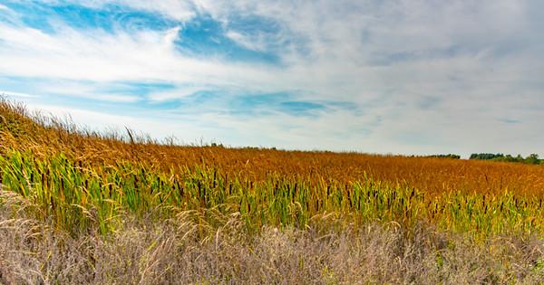 Prairie  4