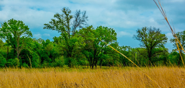 TALL GRASS TWO